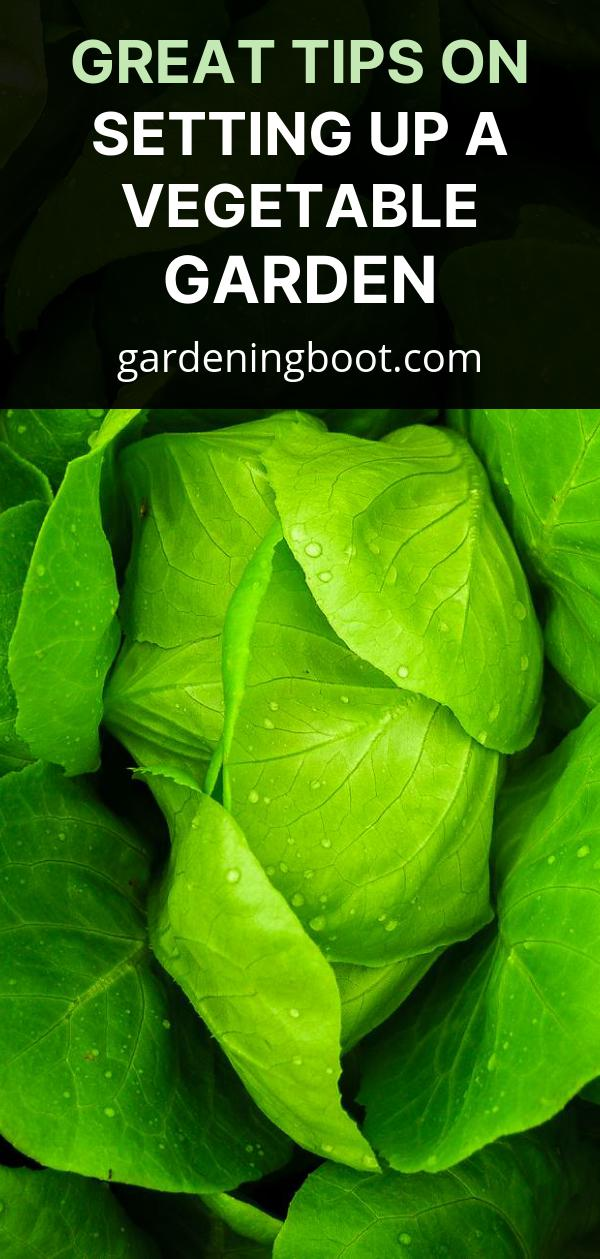 Great Tips on Setting Up a Vegetable Garden