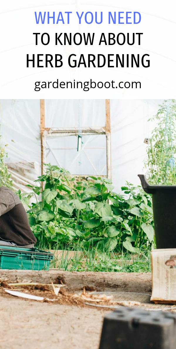 What You Need to Know About Herb Gardening