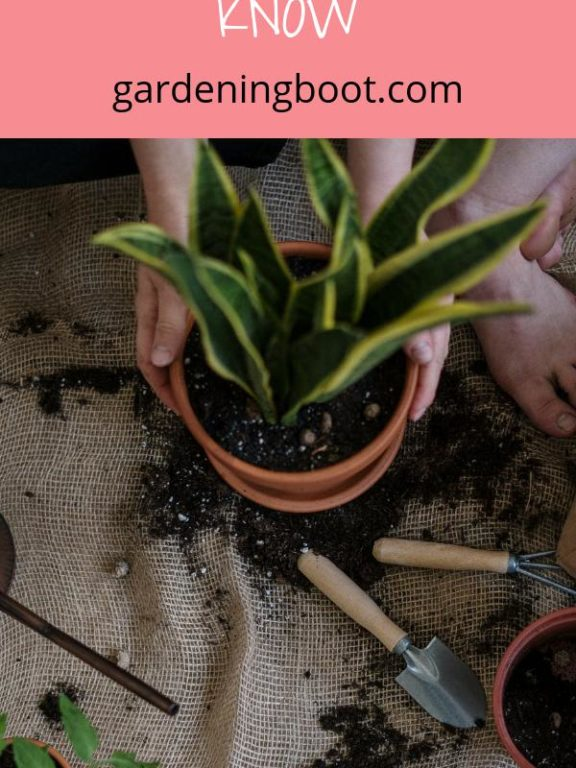 Gardening: What You Need To Know