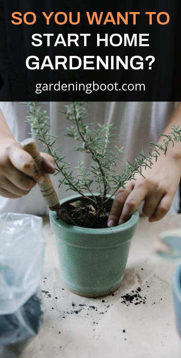 So You Want to Start Home Gardening?
