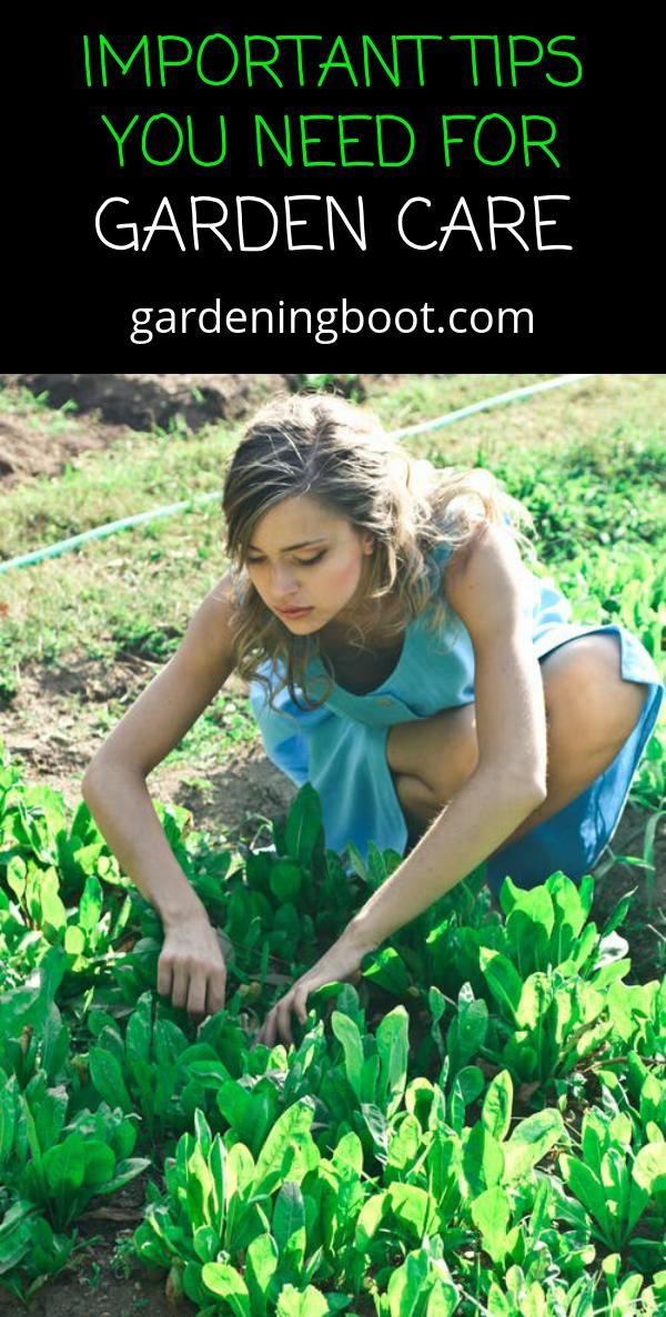 Important Tips You Need For Garden Care