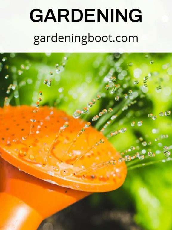 Here Is Your Fantastic Guide for Gardening