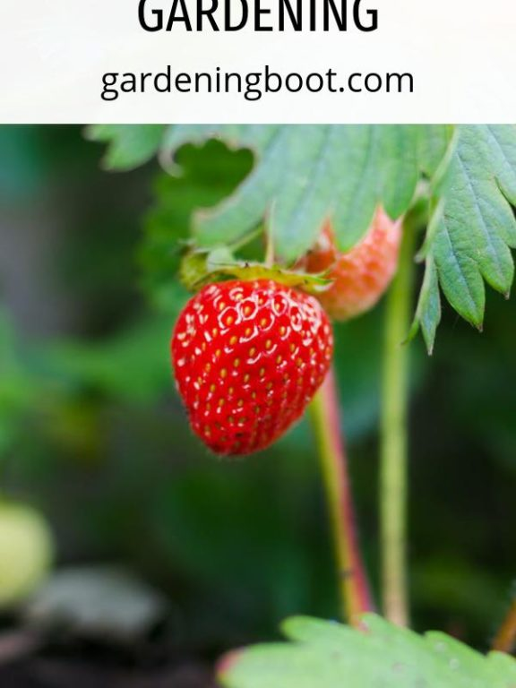 The Ultimate Guide to Get Started with Gardening