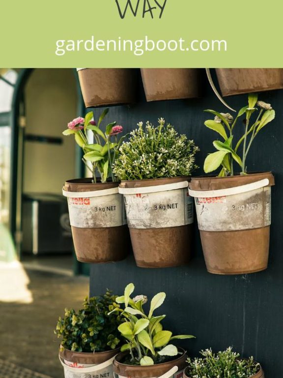 Planning Your Herb Garden the Right Way