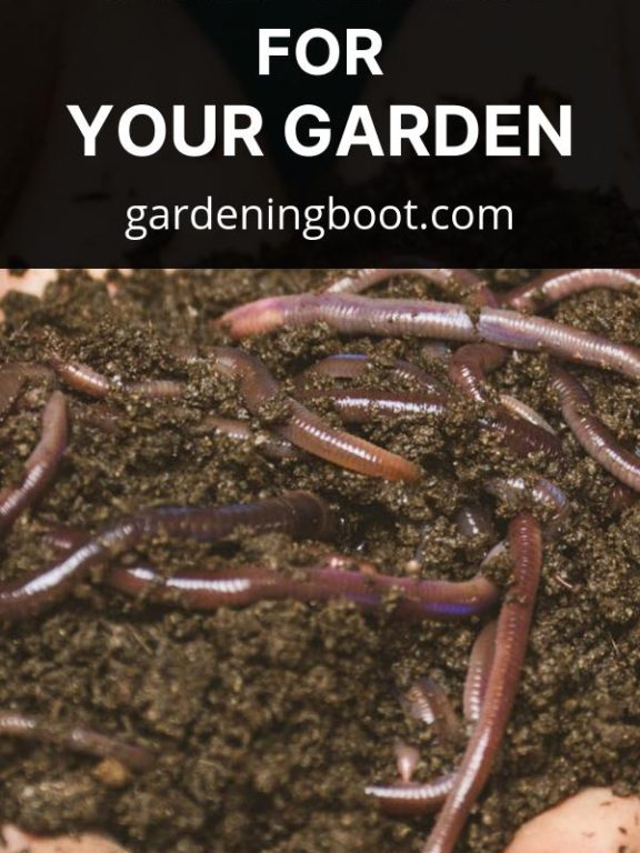 Why You Should Opt for Composting for Your Garden