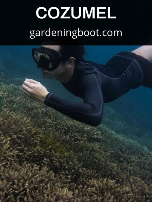 The Essential Guide to Snorkeling in Cozumel