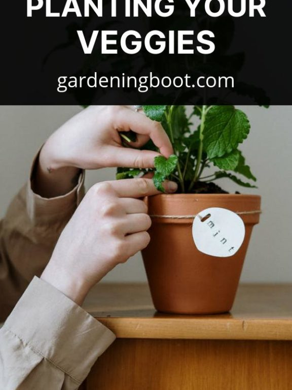 Growth Control Tips When Planting Your Veggies
