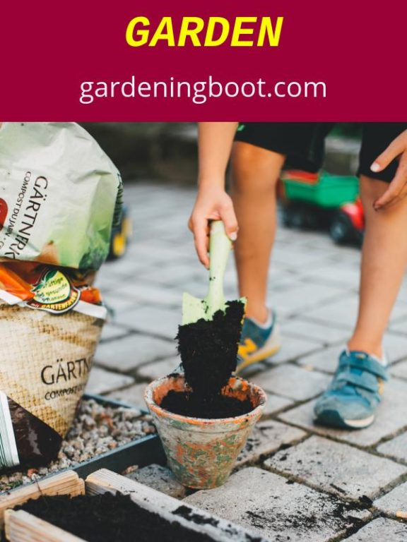 Things to Remember When Starting Your Garden