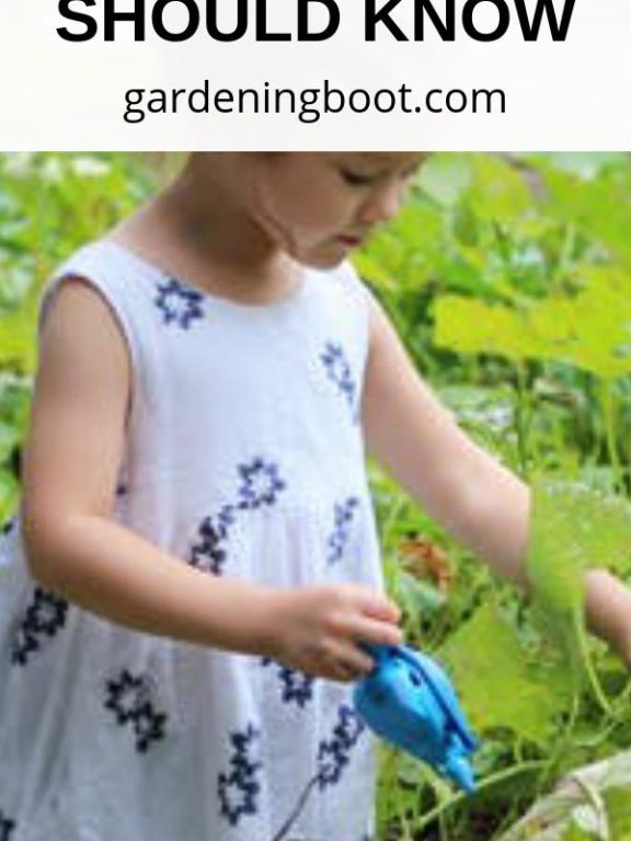 Gardening Advice You Should Know