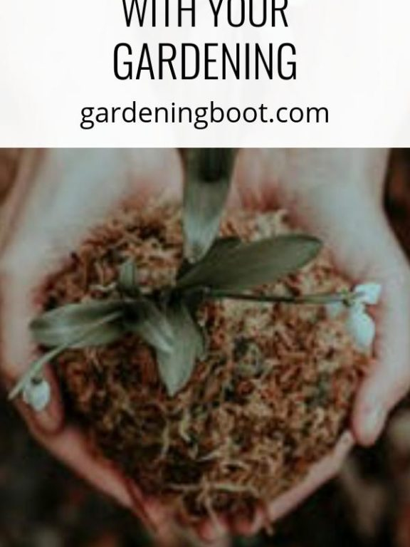 What to Consider Before Going Ahead with Your Gardening